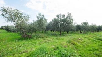 Poljoprivredno zemljište na prodaju Tar-Vabriga Poreč